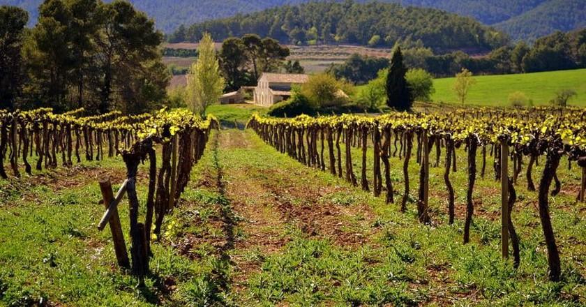Penedes wine region, Catalonia, Spain   © Angela Llop / Flickr