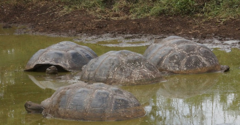 Galapagos Islands tortoises | © Arnie Papp / Flickr