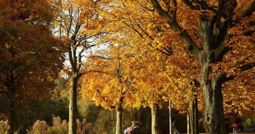 Vondelpark | © Guilhem Vellut / Flickr