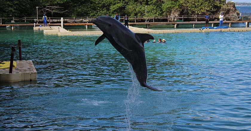Dolphin show at Dolphin's Cove, Jamaica | © Chad Sparkes/Flickr