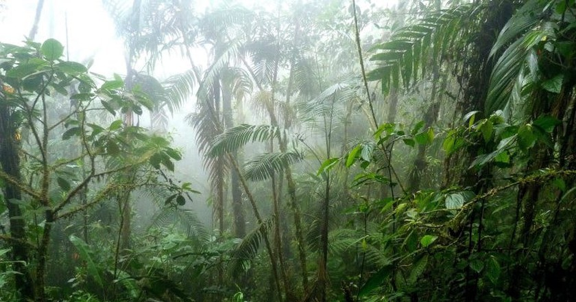 The Colombian Jungle is home to many myths and legends | © Colombia Larry / Flickr
