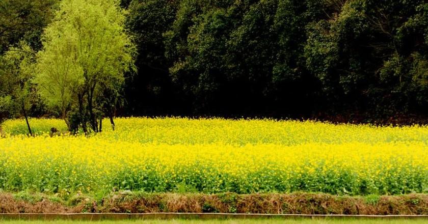 Wuyuan, Jiangxi   ©llee_wu/Flickr