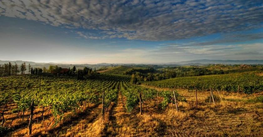 An Italian vineyard | © Francesco Sgroi/Flickr