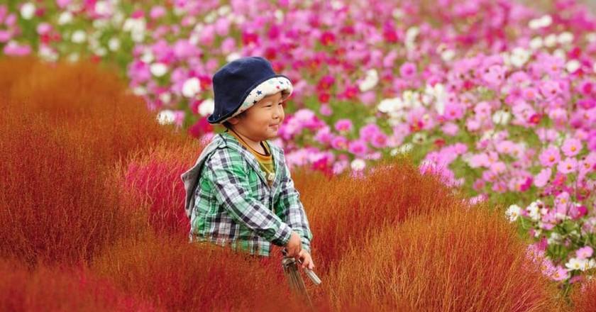 hitachi seaside park_10 | © ajari/ flickr