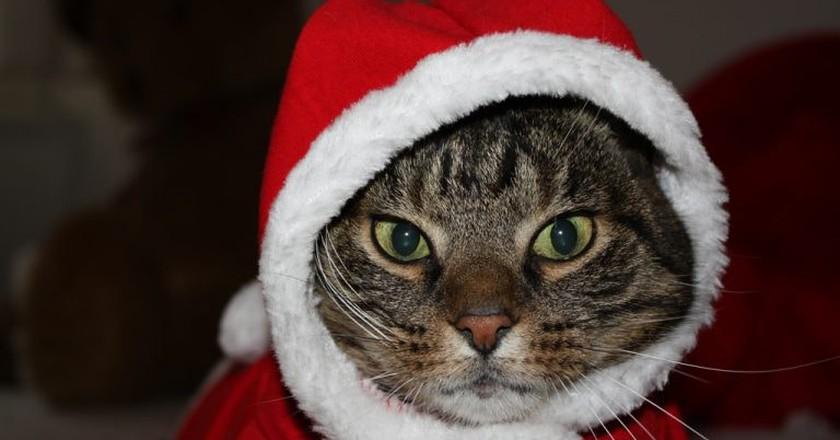 "Ho Ho Ho - ""Meowy Christmas"" | © Dennis Skley / Flickr"
