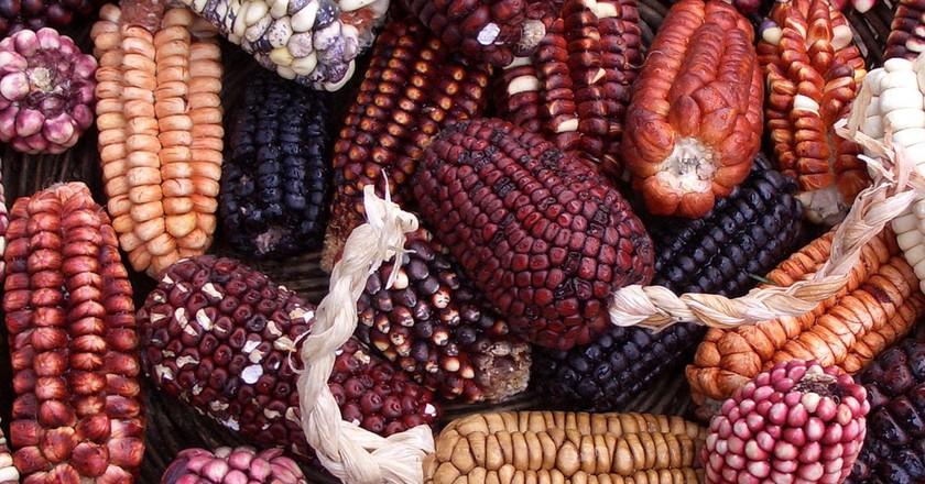 Corn Varieties  Jenny Mealing / flickr