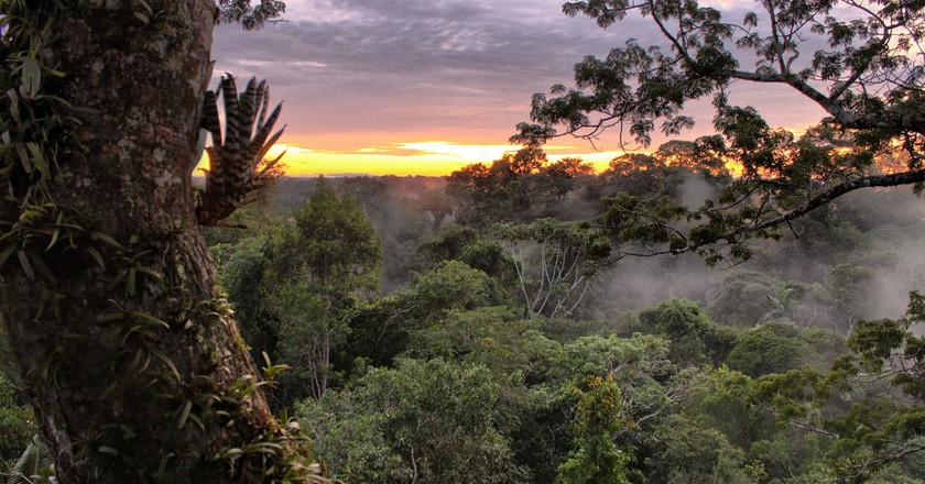 Here's Why Ecuador's National Park Is an Ecological Bulls-Eye: an Interview with Eduardo Pichilingue Ramos