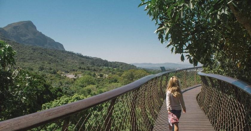 Boomslang canopy walkway   © Jessica Stafford/Culture Trip