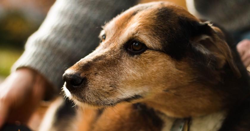 Man's best friend | © Sasha the Okay Photographer/Flickr