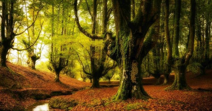 Otzarreta forest ©Armando Gonzalez Alameda/Wikipedia Commons