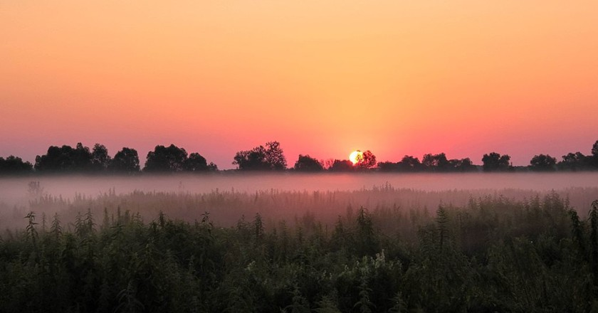 View across a field in Ukraine | © Olena Klen/WikiCommons