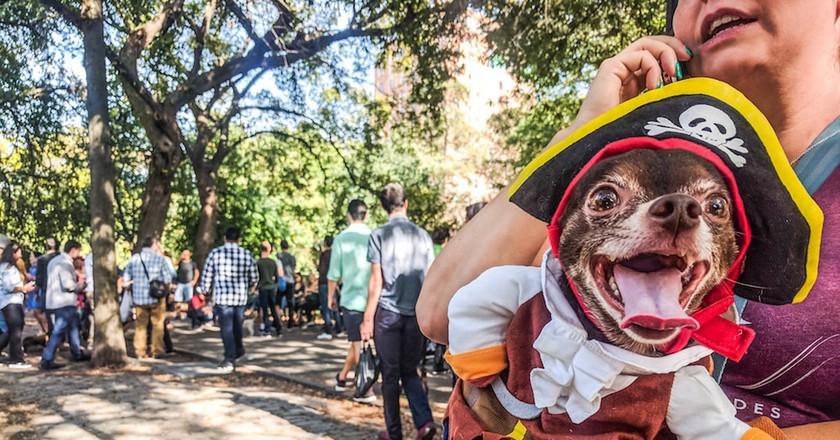 Halloween Dog Parade 2017 | © Amanda Suarez/Culture Trip