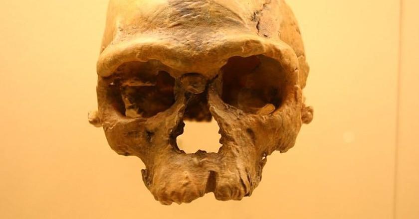 Fossil of Jebel Irhoud | ©  Ryan Somma/WikiCommons