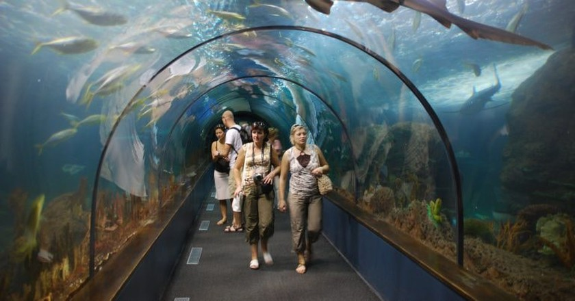 The Shark Tunnel at Loro Park   © Wladyslaw / Wikimedia Commons