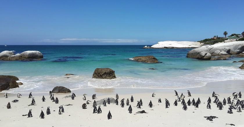 Penguins on Boulders Beach | © PaulNicolsonZA/Pixabay