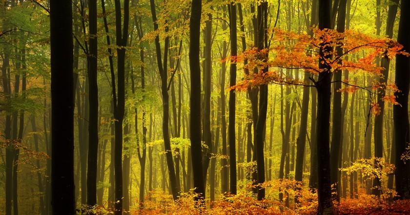 Black Forest   © Tom Tom / Shutterstock