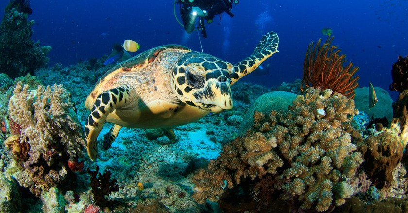 The Best Scuba Diving Spots in Cozumel, Mexico