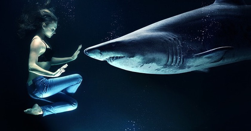 Why Sharks Are Highly Respected in Hawaiian Culture