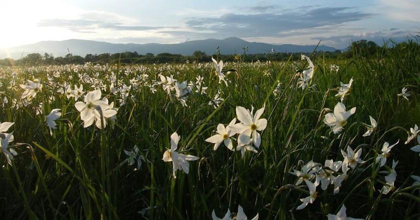Valley of daffodils | © Palaida Sergiy/WikiCommons