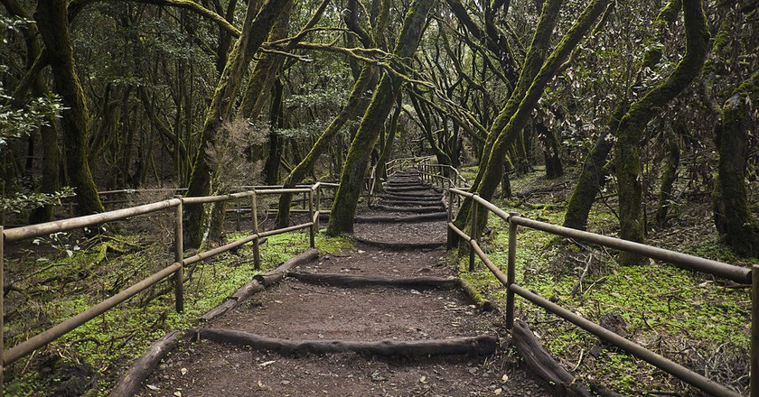 Garajonay National Park | © Diego Delso / WikiCommons