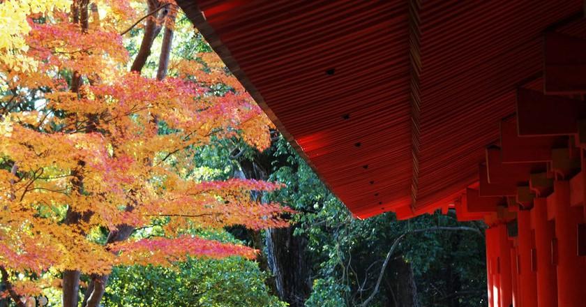 Kasuga Shrine in autumn