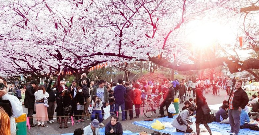 Hanami at Ueno Park 2013 | © Dick Thomas Johnson / Flickr