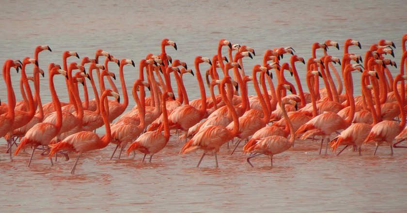 Flamingos at Celestun│© Katja Schulz / Flickr