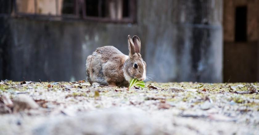 Okunoshima(Rabbit Island) | © c_msmt/ Flickr