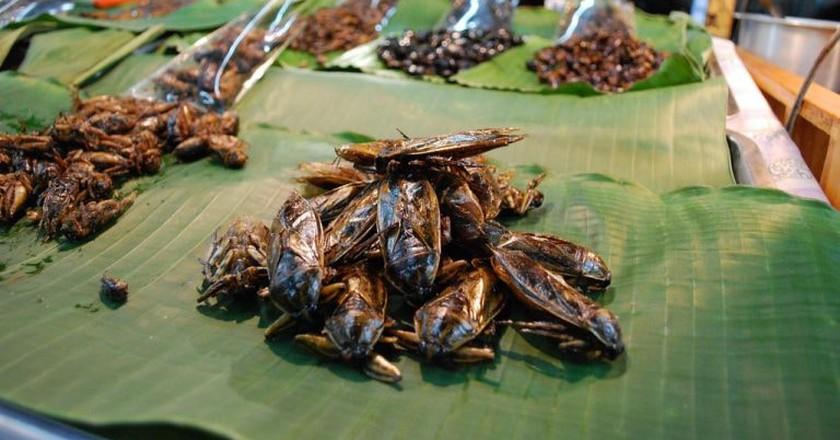 Giant water bug   ©Al