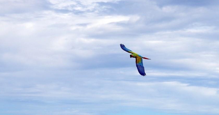 Macaw | © tdlucas5000 / Flickr