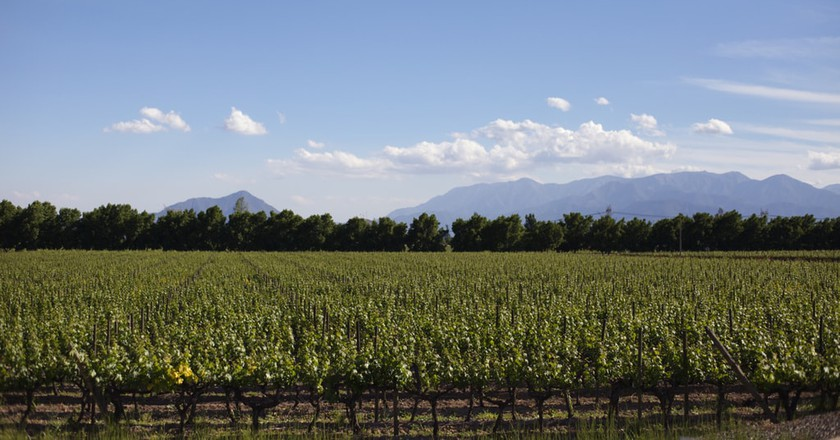 The Best Boutique Wineries in Chile