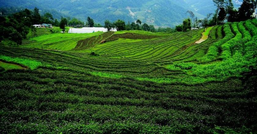 Terrace farming in Sikkim | © soumyajit pramanick / Flickr