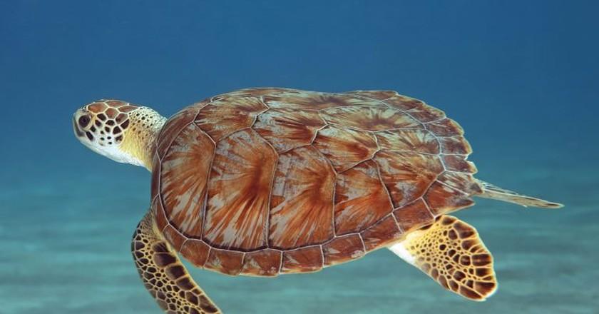 Sea turtle | © Laszlo Ilyes/Flickr