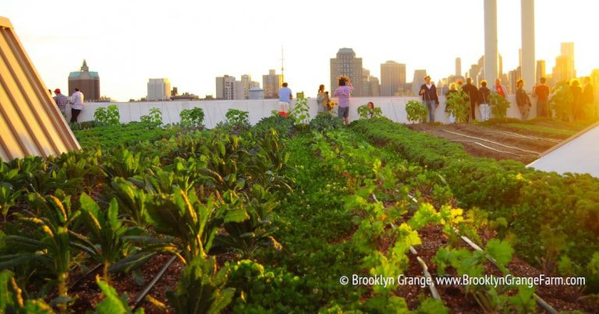 Growing Veggies in a Concrete Jungle: An Introduction to NYC's Urban Farms
