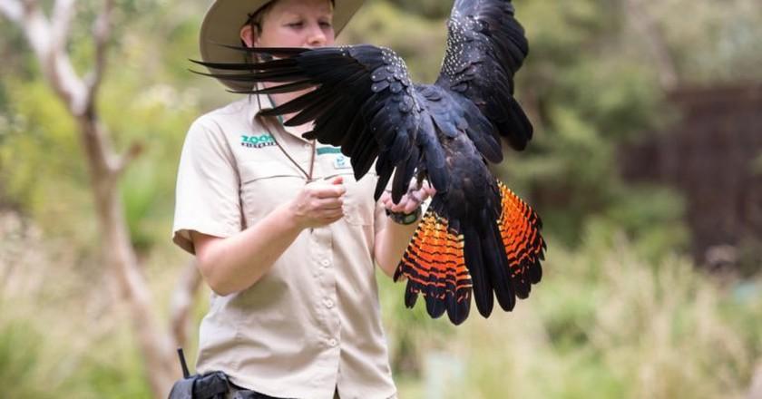 Bird talk    Courtesy Healesville Sanctuary