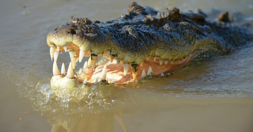 Crocodile | © brianjobson/Flickr