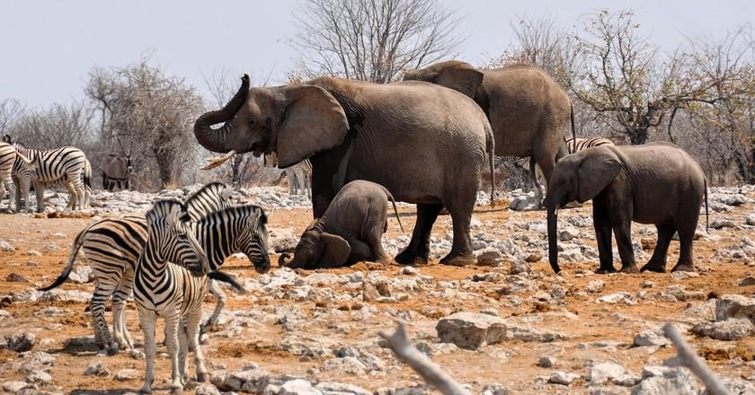 Namibian wildlife | © Kolibri5/Pixabay