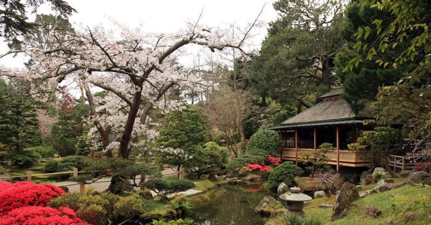 Japanese Tea Garden | © Caroline Culler / WikiCommons
