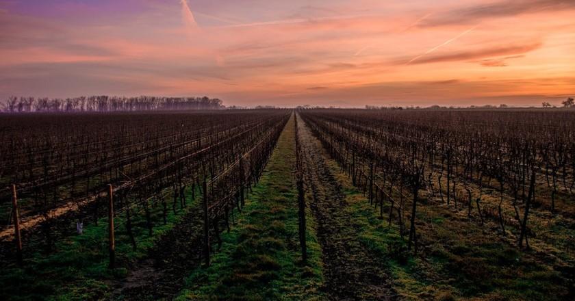 France's wine shortage is scaring wine producers | © Karsten Würth/Unsplash
