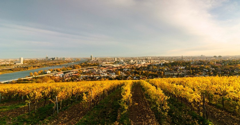 The Best Wineries And Vineyards In Austria