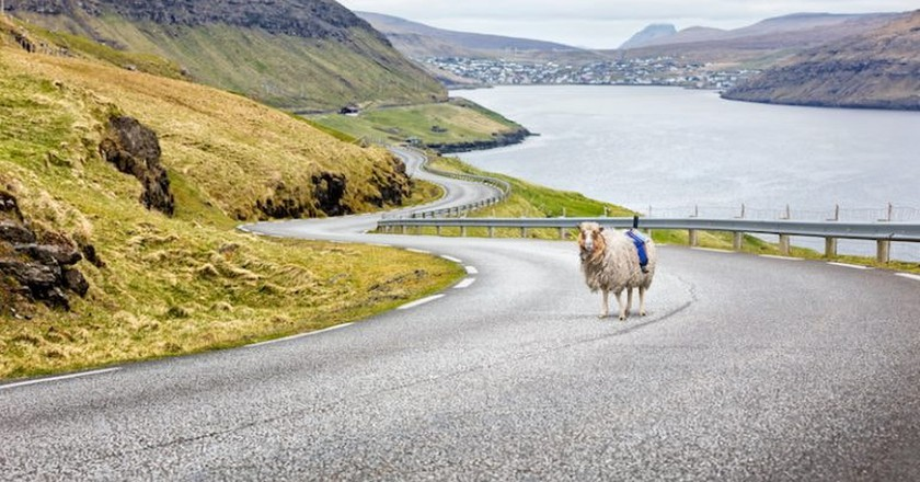 Remote Islanders Strap Cameras to Sheep for Google Street View, Result Is Hilarious