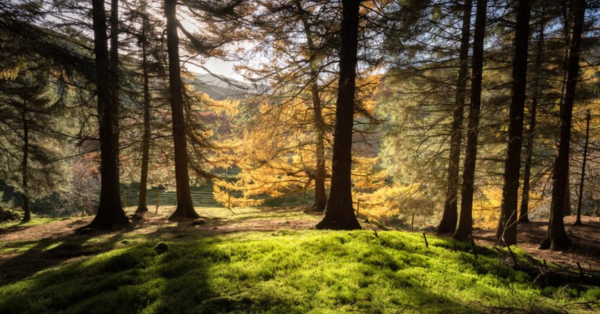 Forest of Derbyshire | © Shahid Khan/Shutterstock