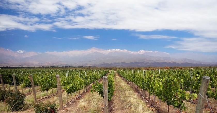 Mendoza vineyard  © Wikimedia