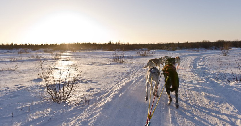 Wapusk Dog Sledding in Churchill | © Canadian Tourism Commission