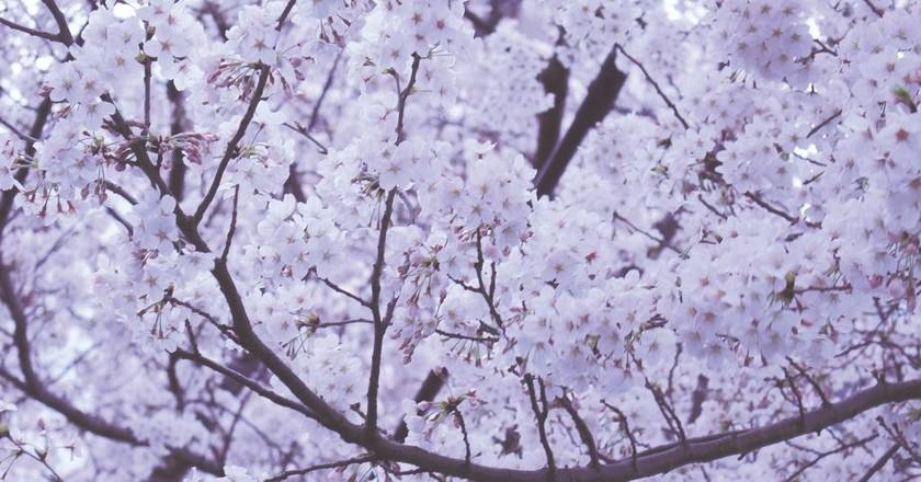 The world has a lot to learn from Japan | © Yuki Yoshida / Unsplash