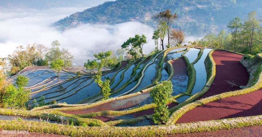 Sunrise color of rice terraces in Yuan Yang | © Donald Tagra / Flickr