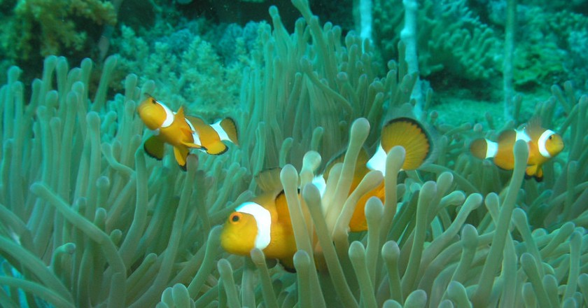 Nemo? | © travellingrunes/Flickr
