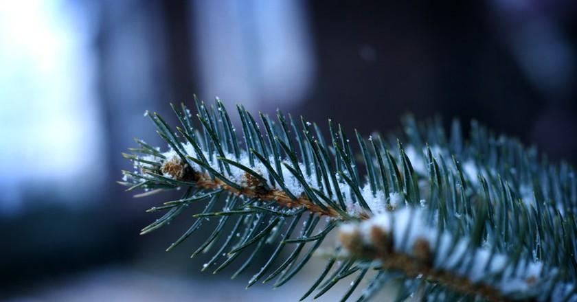 Snowfall | © Ginny / Flickr