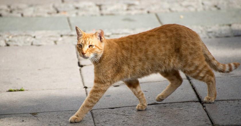 Street cat | © akras/Flickr