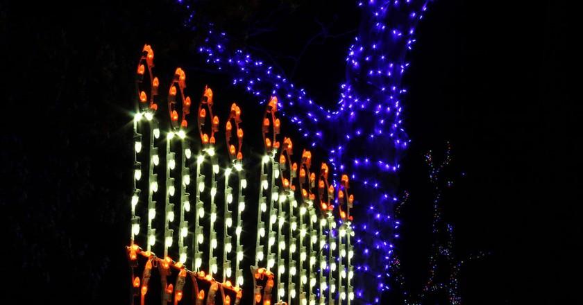 Hanukkah Lights | daveynin/Flickr